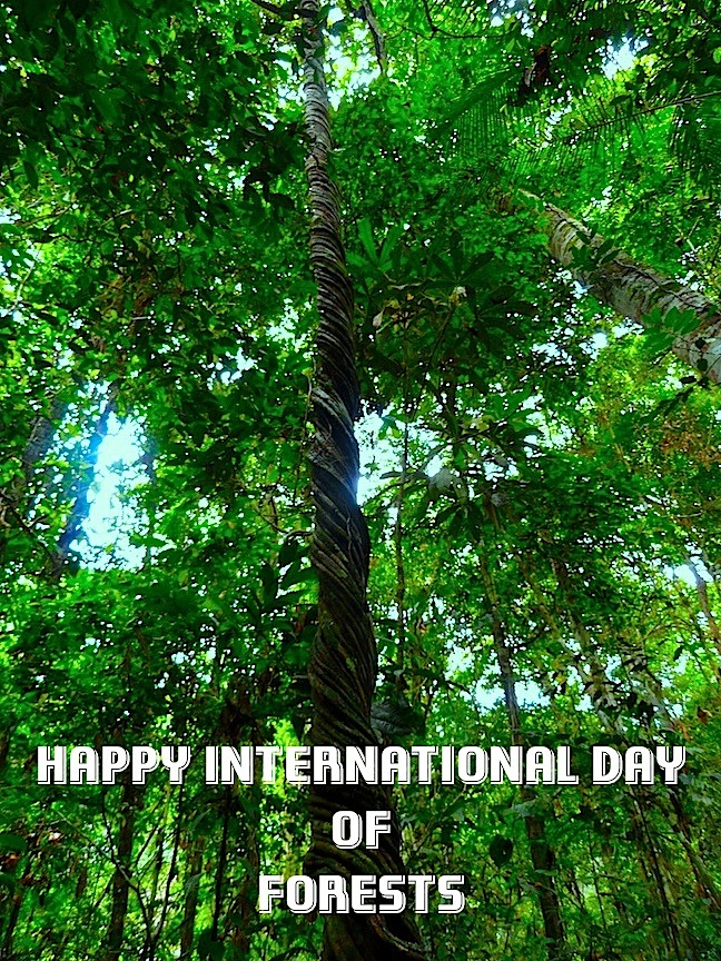 Happy International Day of Forests!